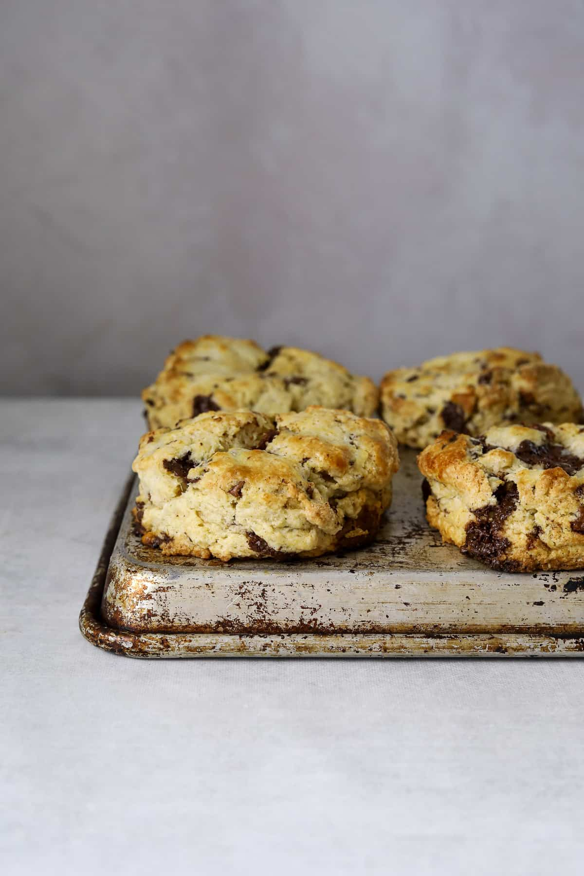 four chocolate scones on a a baking tray with a blue background
